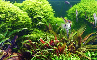 Fish tank with a canister filter