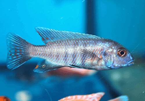 The extensive List of Fish that Start with Z | Freshwater ...
