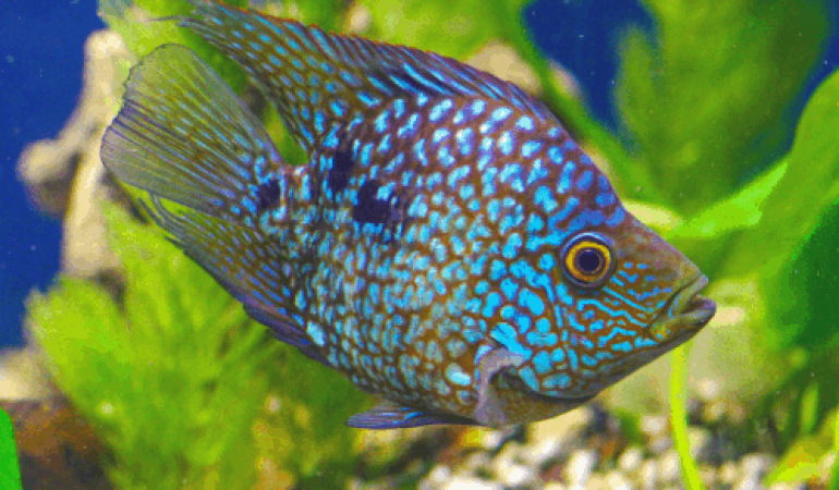 The extensive List of Fish that Start with T | Freshwater ...